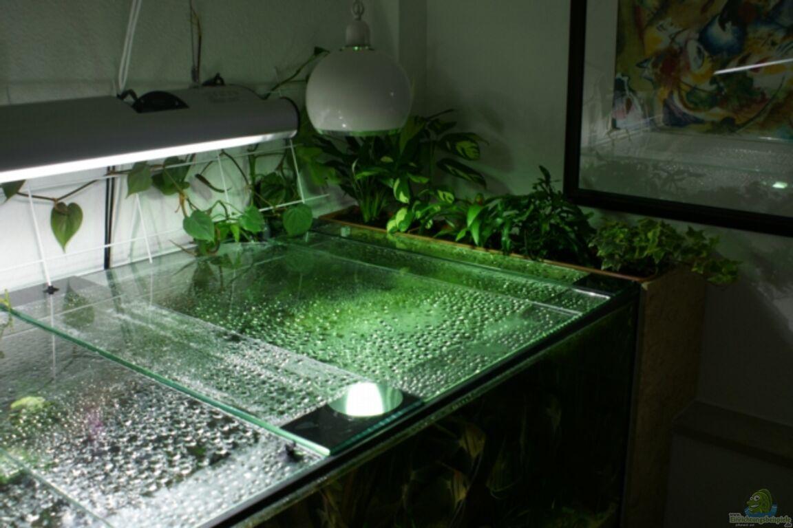 aquarium von hightower208 rotr ckenparadies. Black Bedroom Furniture Sets. Home Design Ideas
