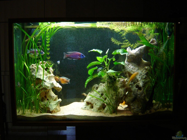 Aquarium Raumteiler