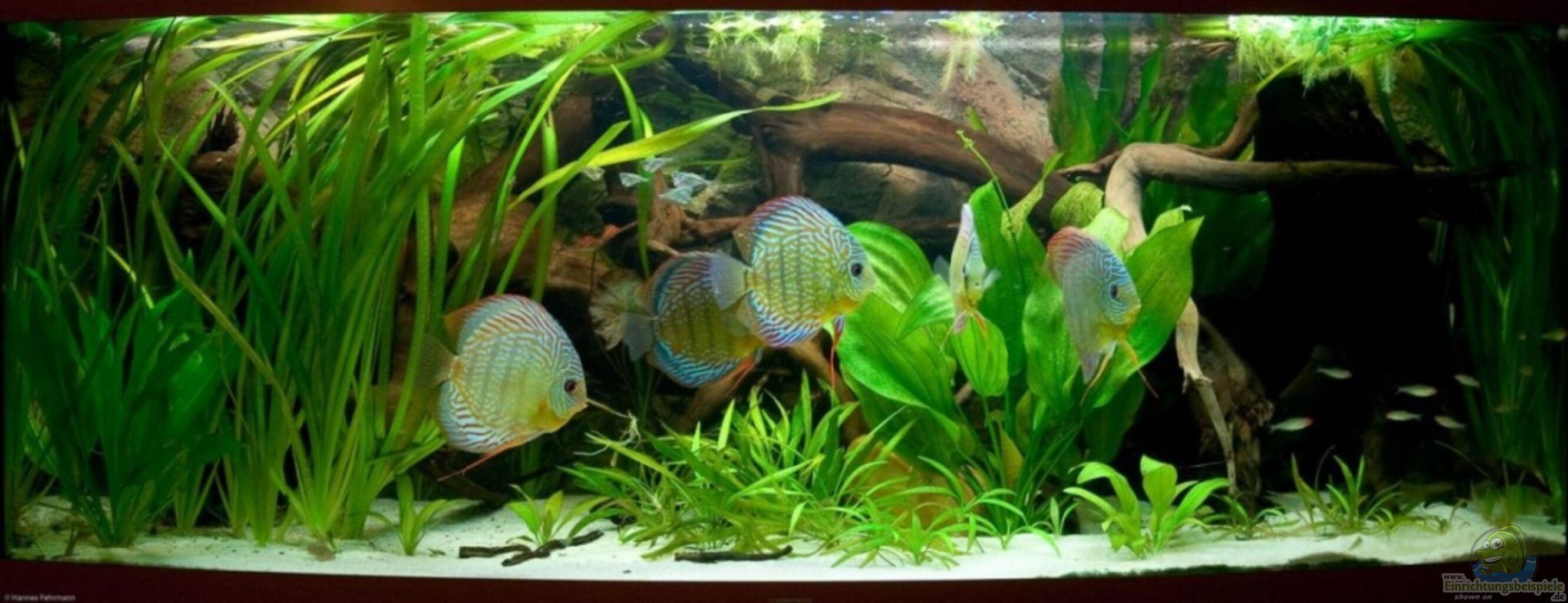 aquarium von kiera hannes natural discus habitat. Black Bedroom Furniture Sets. Home Design Ideas