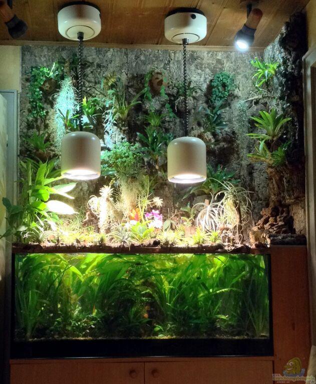 Aquarium Als Terrarium Verwenden : Aquarien als paludarium einrichten