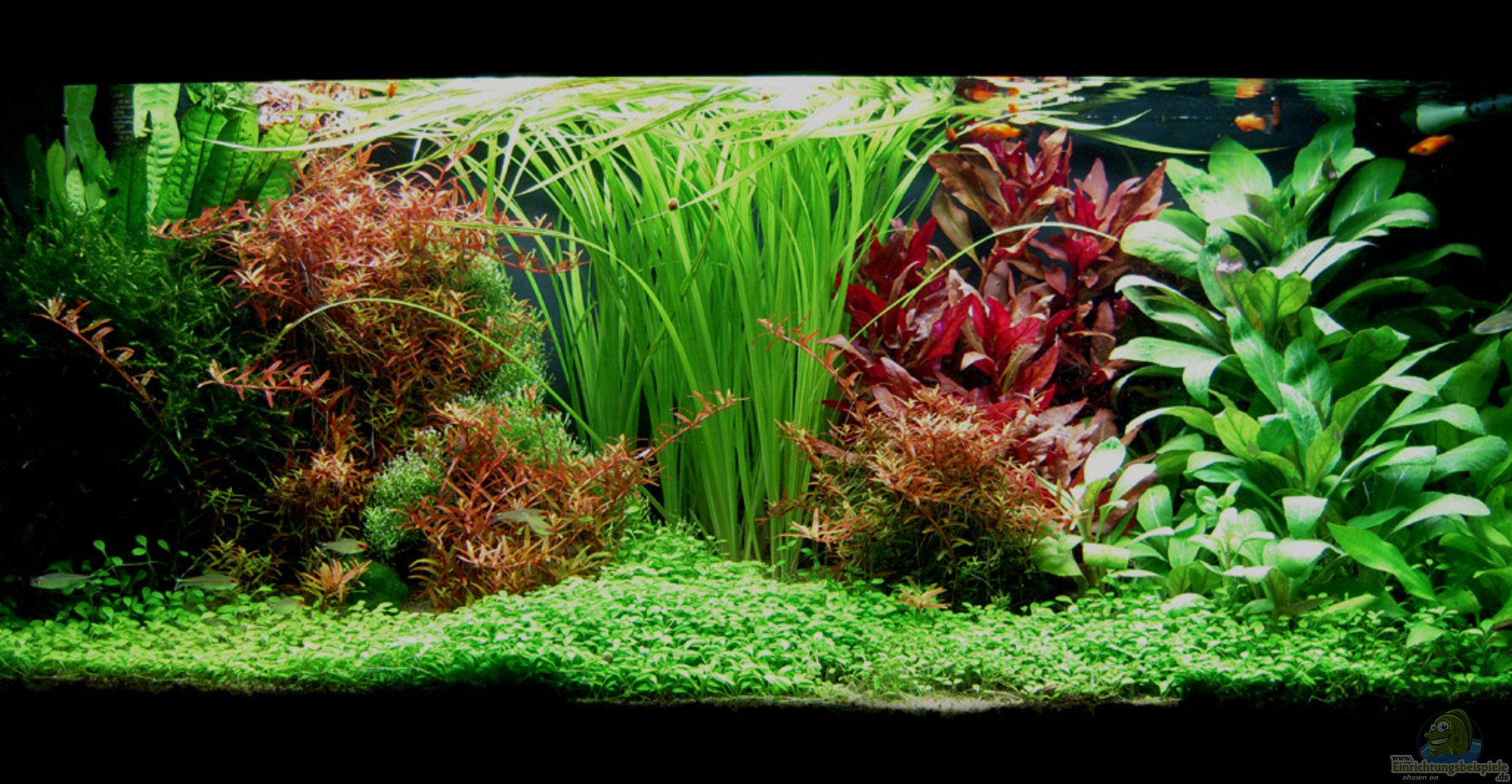 aquarium von plankton 13880 pflanzenbecken. Black Bedroom Furniture Sets. Home Design Ideas