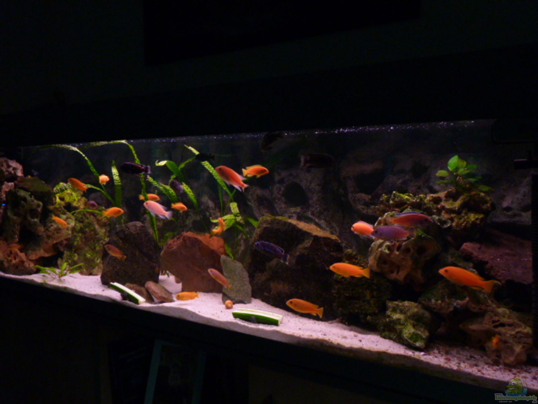 aquarium von mf80 malawi becken 450. Black Bedroom Furniture Sets. Home Design Ideas