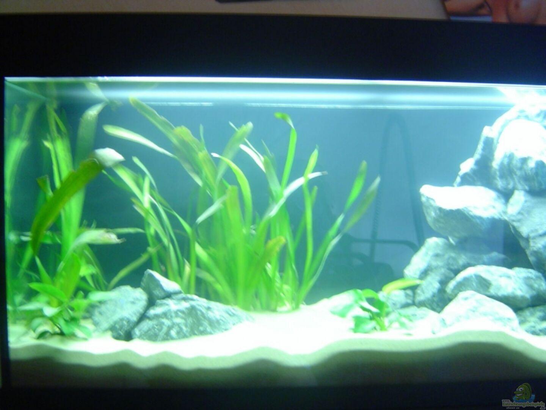 aquarium von christoph terkatz 13891 mbuna becken. Black Bedroom Furniture Sets. Home Design Ideas