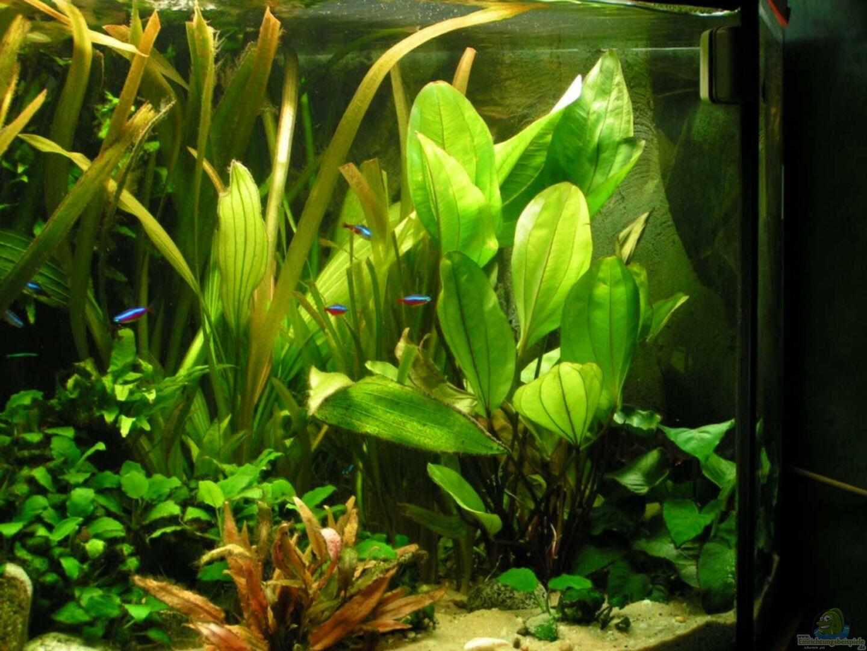 aquarium von vito becken 13906 nur noch als beispiel. Black Bedroom Furniture Sets. Home Design Ideas