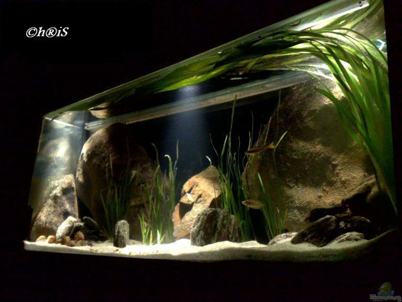 aquarium von h is channel ii. Black Bedroom Furniture Sets. Home Design Ideas