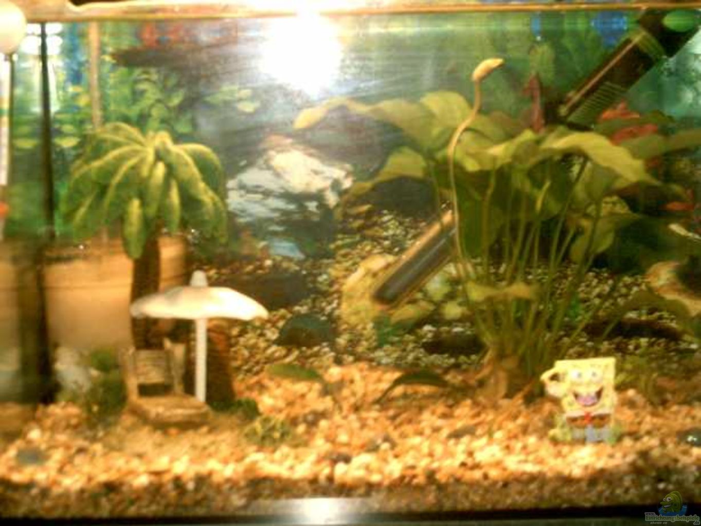aquarium von summsi 25er standard. Black Bedroom Furniture Sets. Home Design Ideas