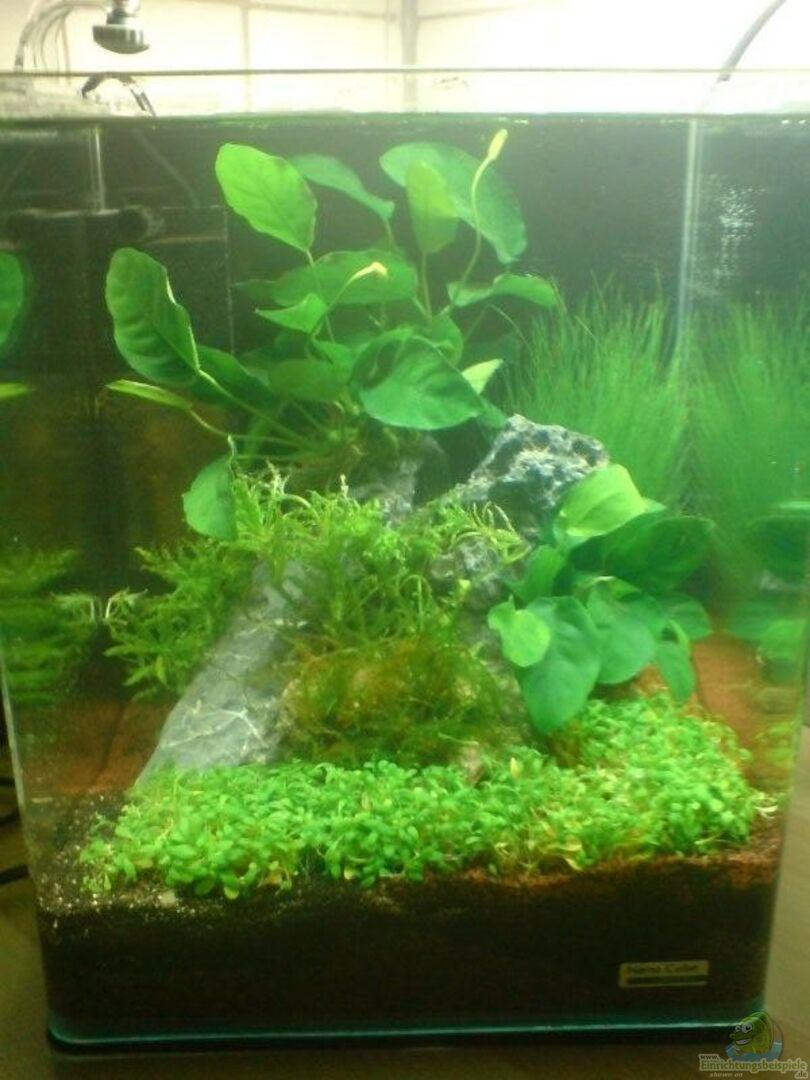 aquarium von nano fan 13964 nano cube planted. Black Bedroom Furniture Sets. Home Design Ideas