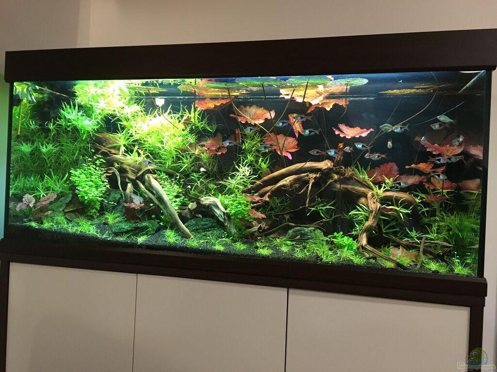 Aquarium von juju: entspannung im sessel