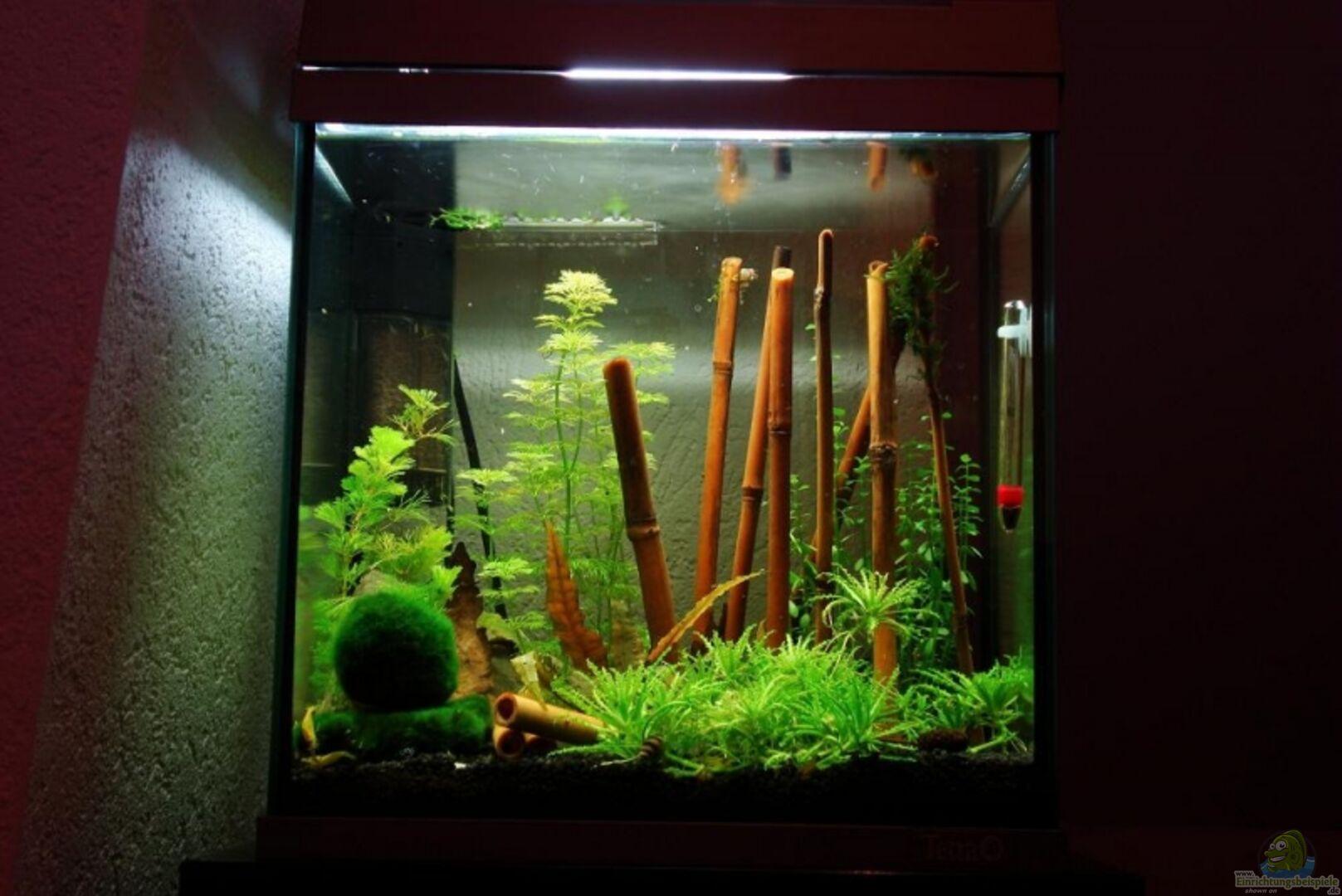 Aquarium Von Tobi 88 14063 Yellow Fire Aquarium
