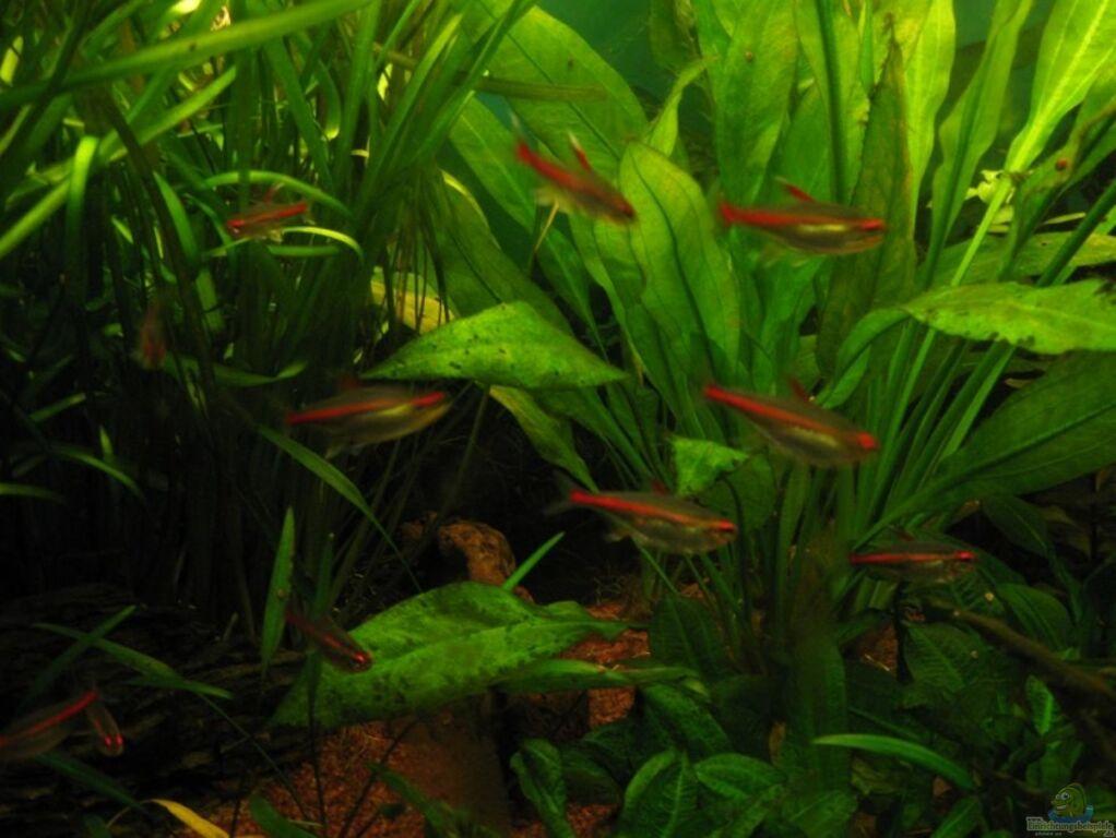 Aquarium von turbotorsten s d mittelamerika for Co2 tabelle jbl