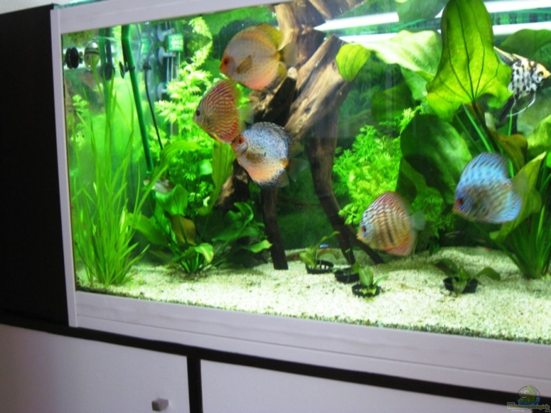 exemple nombre 14142 de cat gorie aquariums am rique mixtes. Black Bedroom Furniture Sets. Home Design Ideas