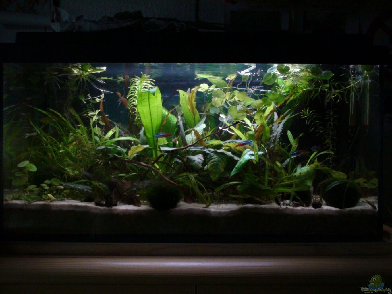 aquarium von snipi 54l aq. Black Bedroom Furniture Sets. Home Design Ideas