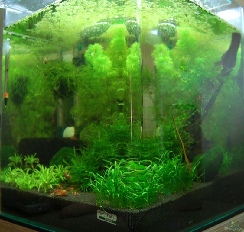 aquarium von bjoehrn nano cube 30l. Black Bedroom Furniture Sets. Home Design Ideas