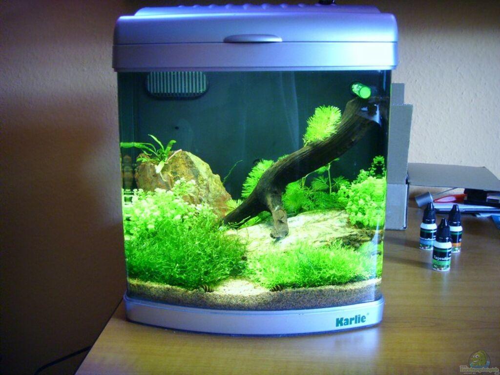 aquarium nano becken aus nano becken von maggus. Black Bedroom Furniture Sets. Home Design Ideas