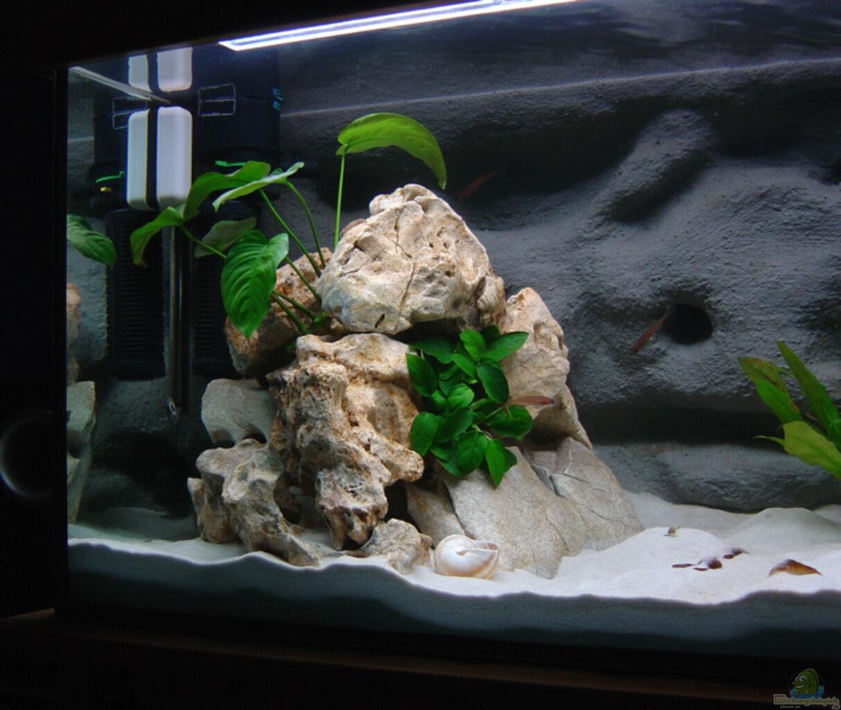 aquarium von jan scherrle becken 1421. Black Bedroom Furniture Sets. Home Design Ideas