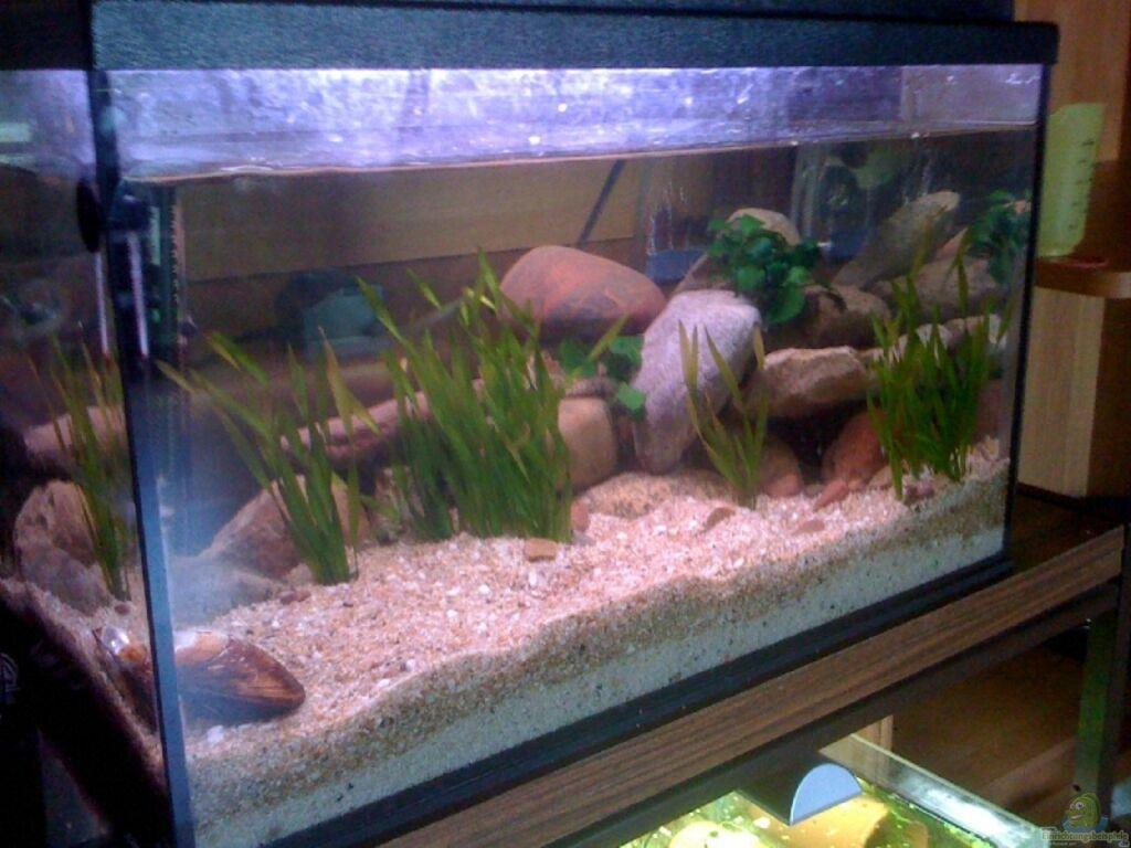 aquarium von marvin g tting 54l tanganijka. Black Bedroom Furniture Sets. Home Design Ideas