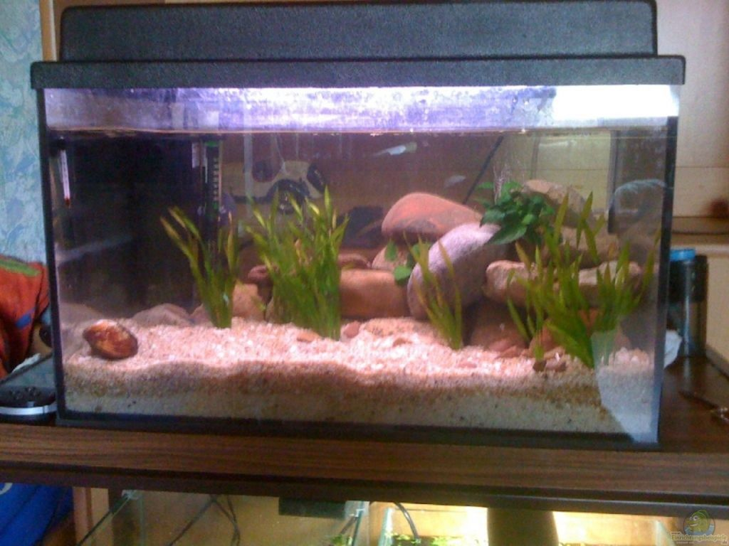 Aquarium von Marvin G u00f6tting  54l Tanganijka