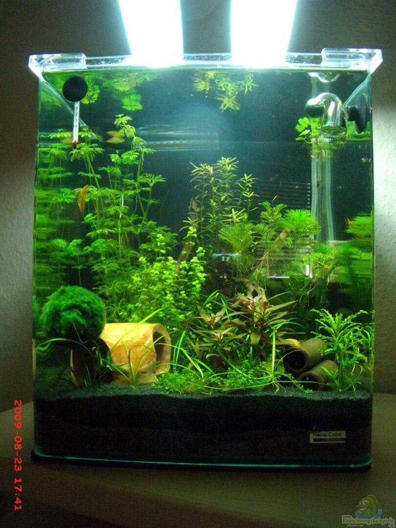 aquarium von sebastian wischnewski 14286 nano cube30. Black Bedroom Furniture Sets. Home Design Ideas