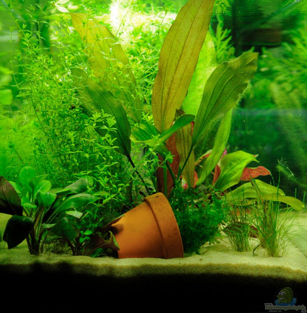 aquarium von nadd l mein erstes kleines aquarium. Black Bedroom Furniture Sets. Home Design Ideas