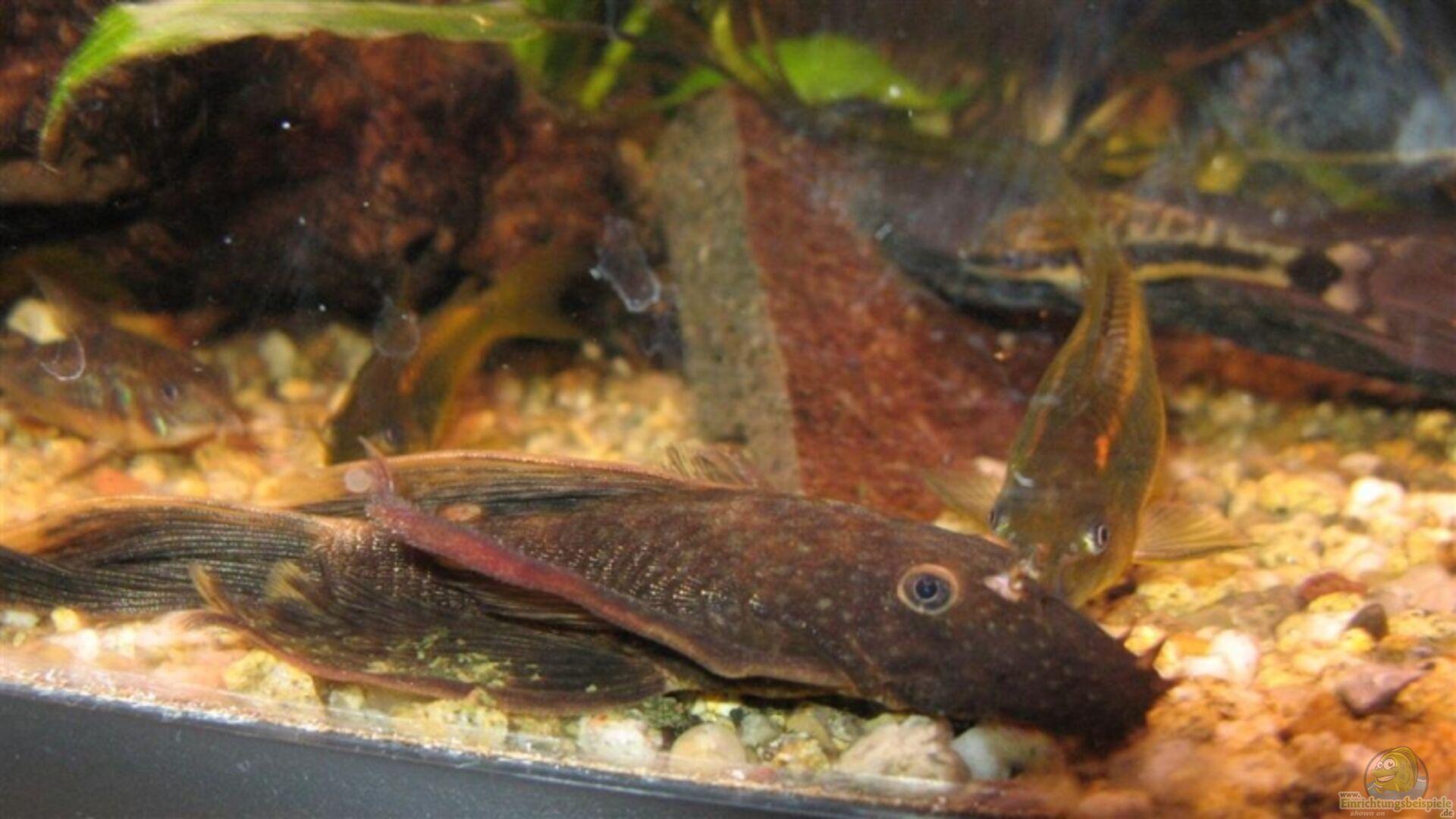Aquarium von thorge 14384 kleiner unterwasser urwald for Rote ziersteine