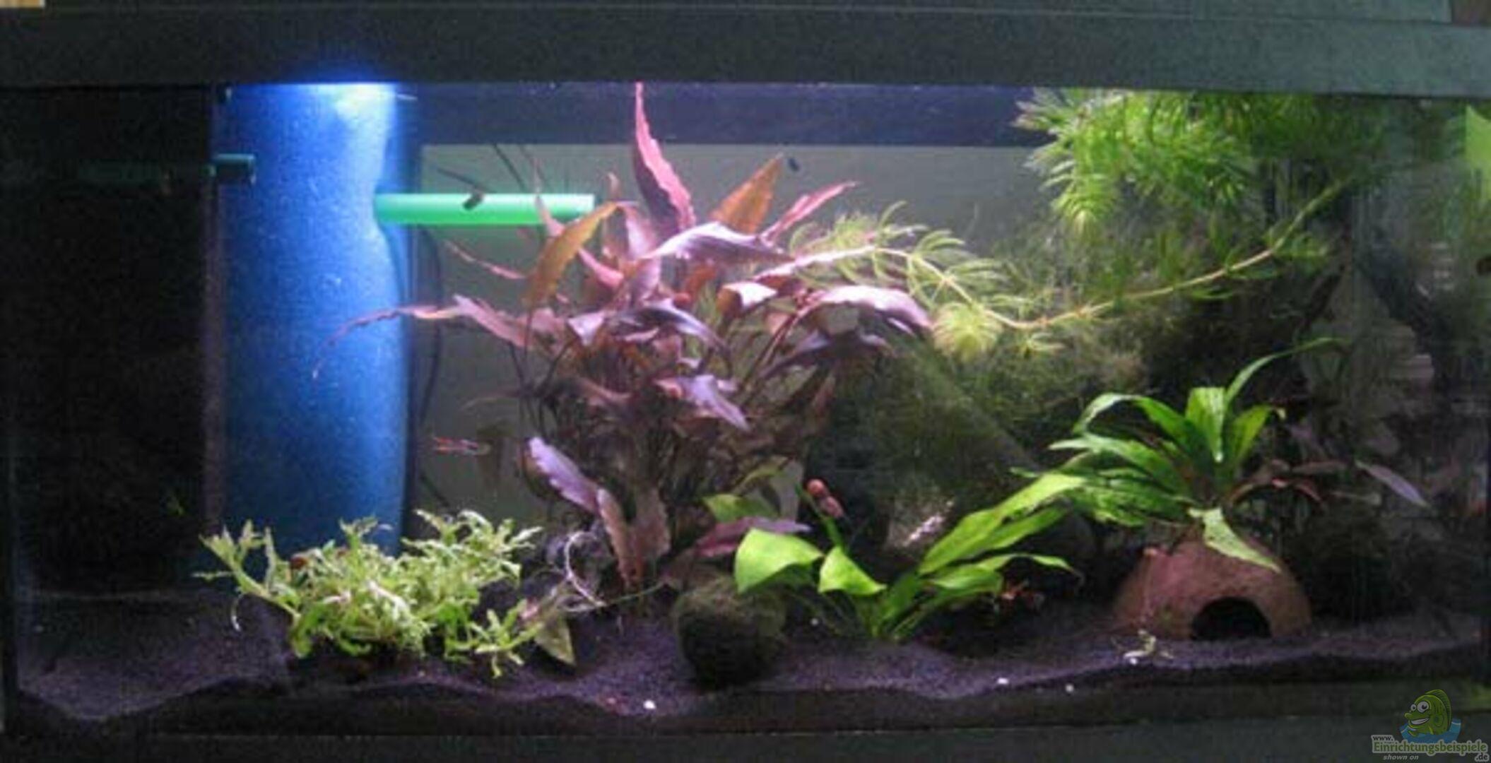 aquarium von julian2010 becken 14517. Black Bedroom Furniture Sets. Home Design Ideas