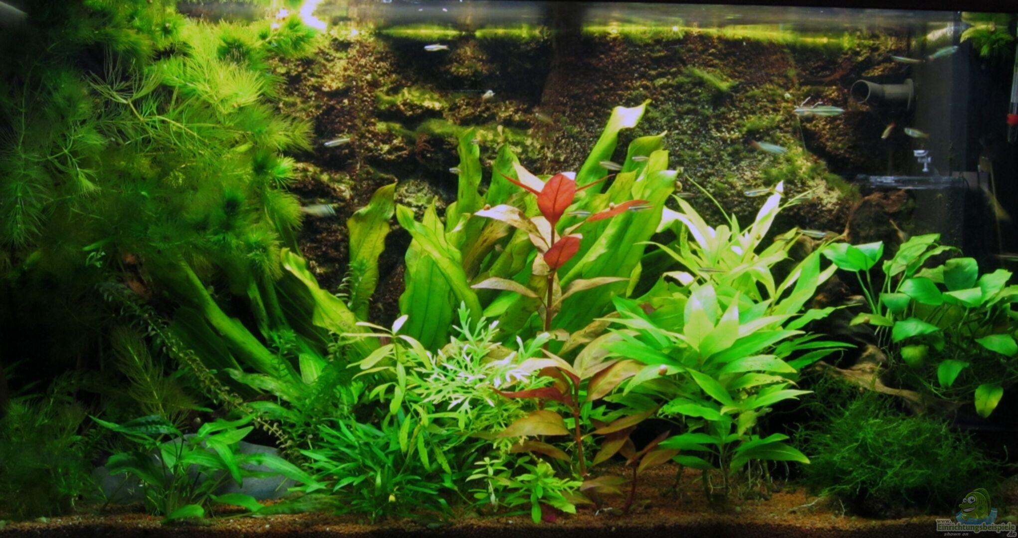 aquarium von wysel 14537 juwel rio 125. Black Bedroom Furniture Sets. Home Design Ideas