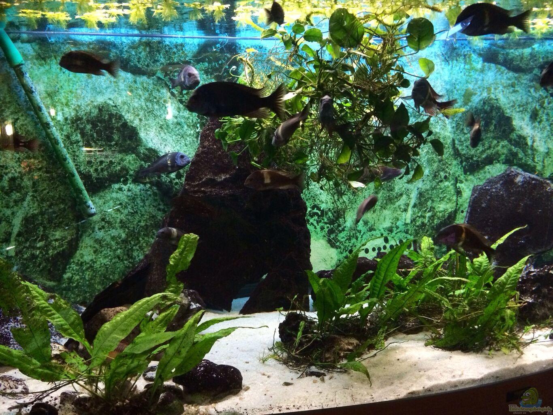 bersicht ber die aquariumbilder aus den 8618 beispielen seite 4. Black Bedroom Furniture Sets. Home Design Ideas