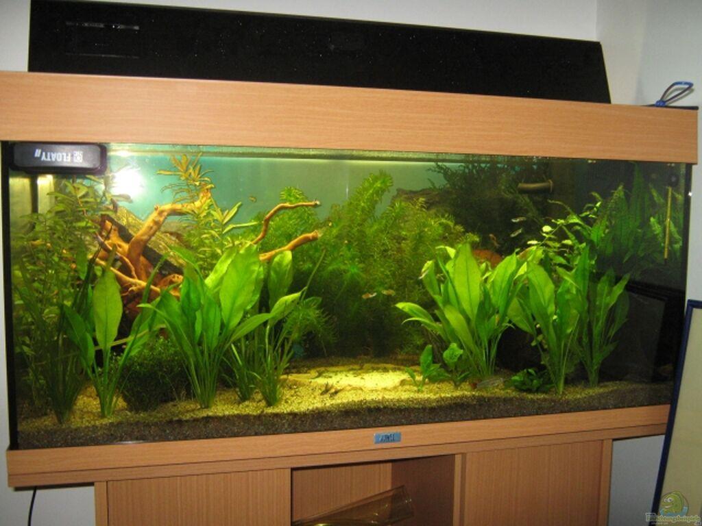 aquarium von sven lowbob anf nger becken 19. Black Bedroom Furniture Sets. Home Design Ideas