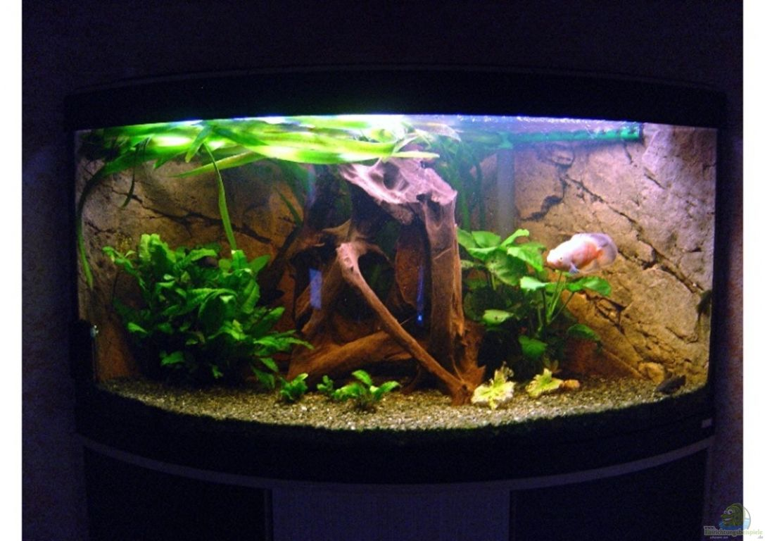 aquarium von tobias meyer fluval venezia 350. Black Bedroom Furniture Sets. Home Design Ideas