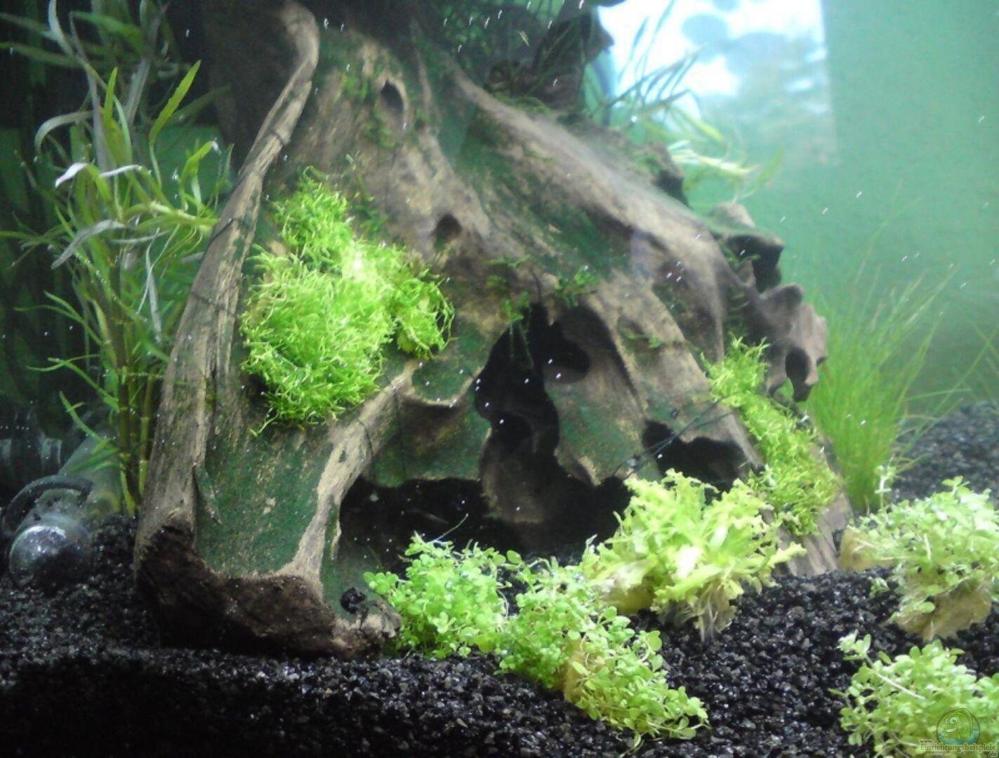 aquarium von patric becken 14582. Black Bedroom Furniture Sets. Home Design Ideas