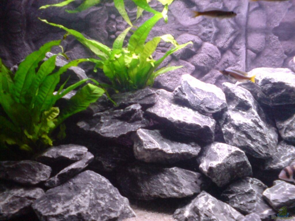 aquarium von bbert tanganjika gesellschaft. Black Bedroom Furniture Sets. Home Design Ideas