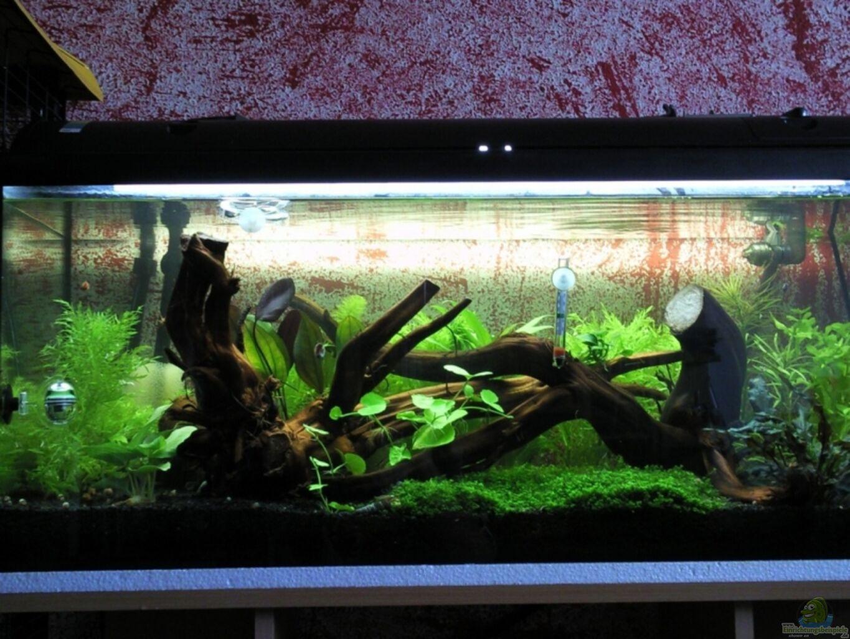 aquarium von crayfish79 becken garnelen 1. Black Bedroom Furniture Sets. Home Design Ideas