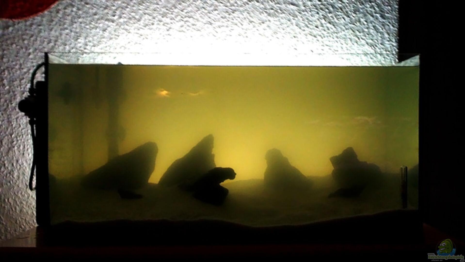 aquarium von getreal 14631 namia. Black Bedroom Furniture Sets. Home Design Ideas