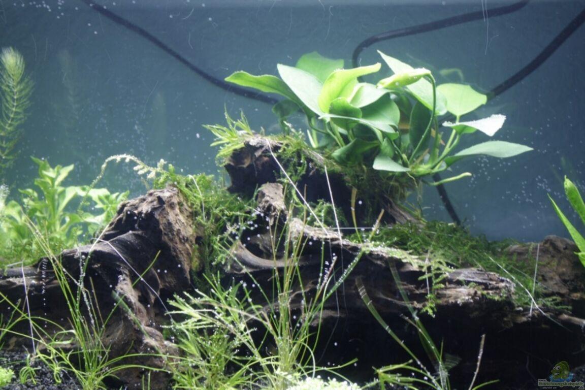 aquarium von havok4615 garnelen und fische und krebse. Black Bedroom Furniture Sets. Home Design Ideas