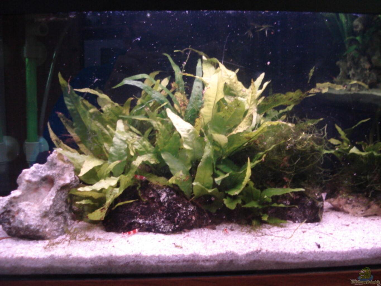 aquarium von lukas szewczyk red bee garnelen. Black Bedroom Furniture Sets. Home Design Ideas