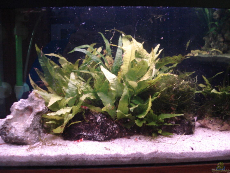 aquarium von lukas szewczyk 14678 red bee garnelen. Black Bedroom Furniture Sets. Home Design Ideas