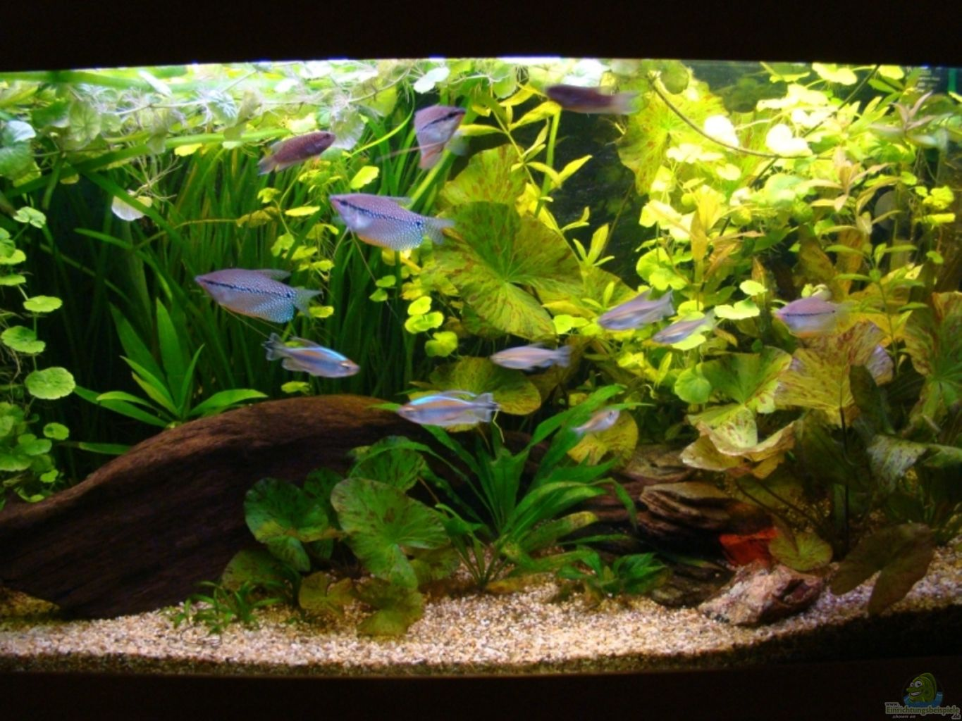 Example no 14854 from the category community tanks for Aquarium 200 litres