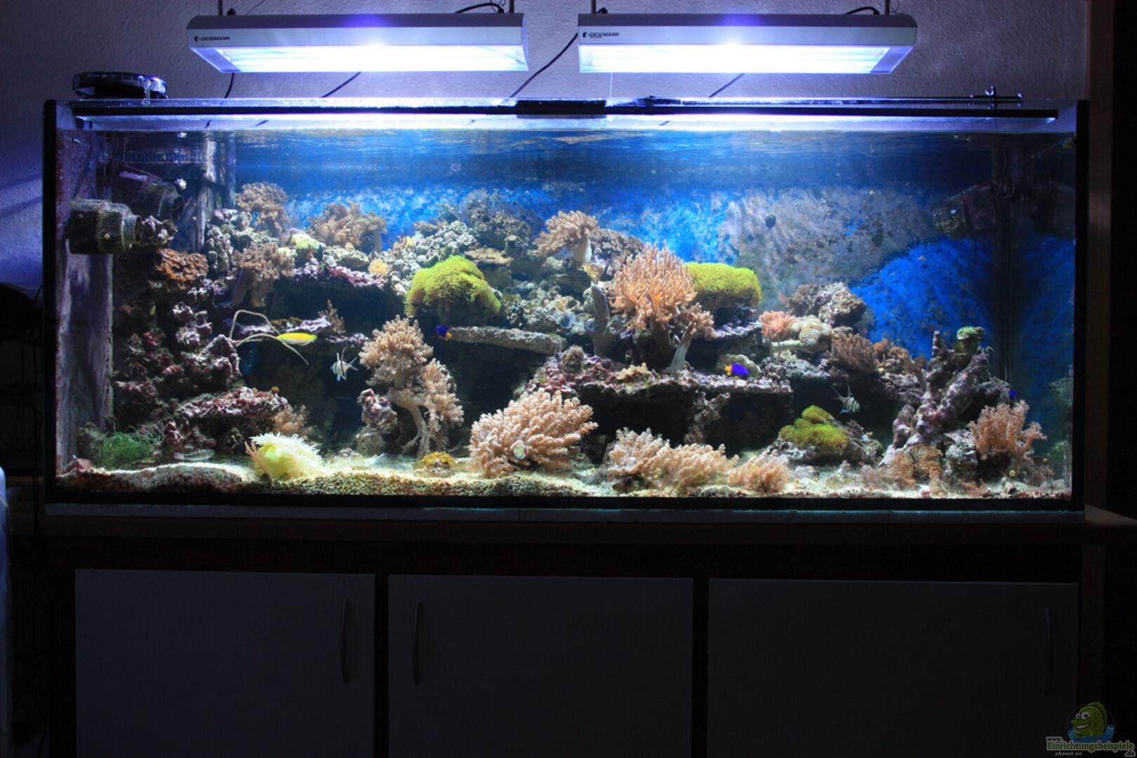 aquarium von meik krahlheer 14875 mein kleines riff. Black Bedroom Furniture Sets. Home Design Ideas