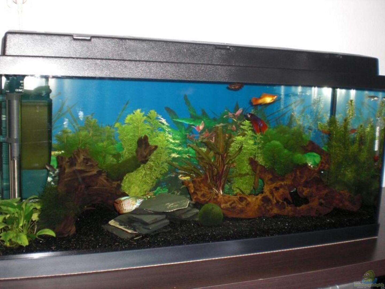 Aquarium von christian dorch becken 14906 for Kampffisch becken