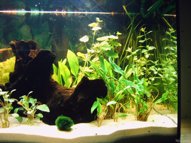 aquarium von paul geuer becken 1494. Black Bedroom Furniture Sets. Home Design Ideas