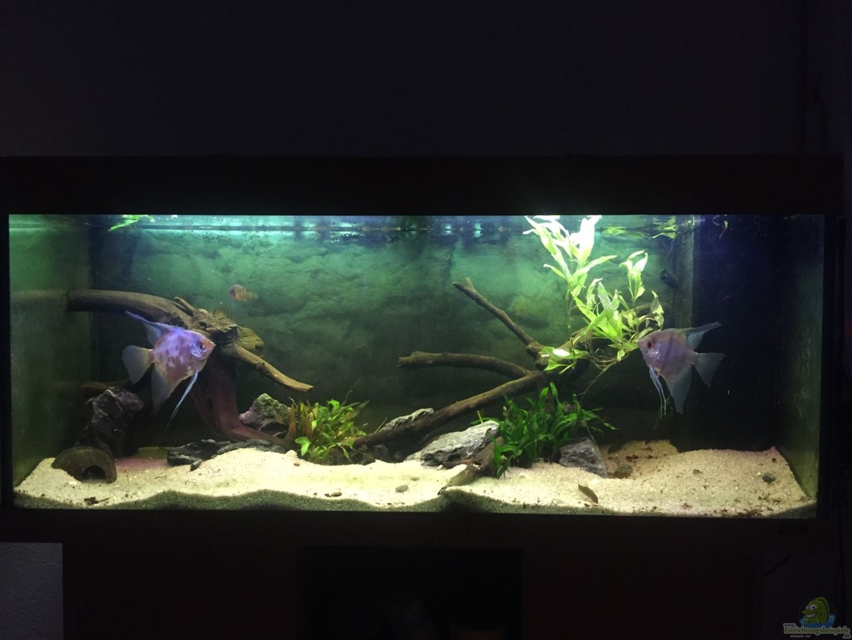 aquarium von andr sidler becken 1500. Black Bedroom Furniture Sets. Home Design Ideas