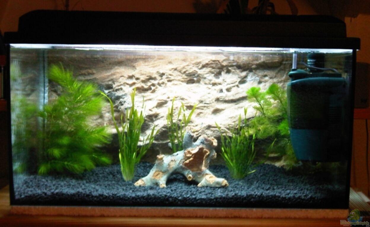 einrichtungsbeispiele f r wirbellose aquarien. Black Bedroom Furniture Sets. Home Design Ideas