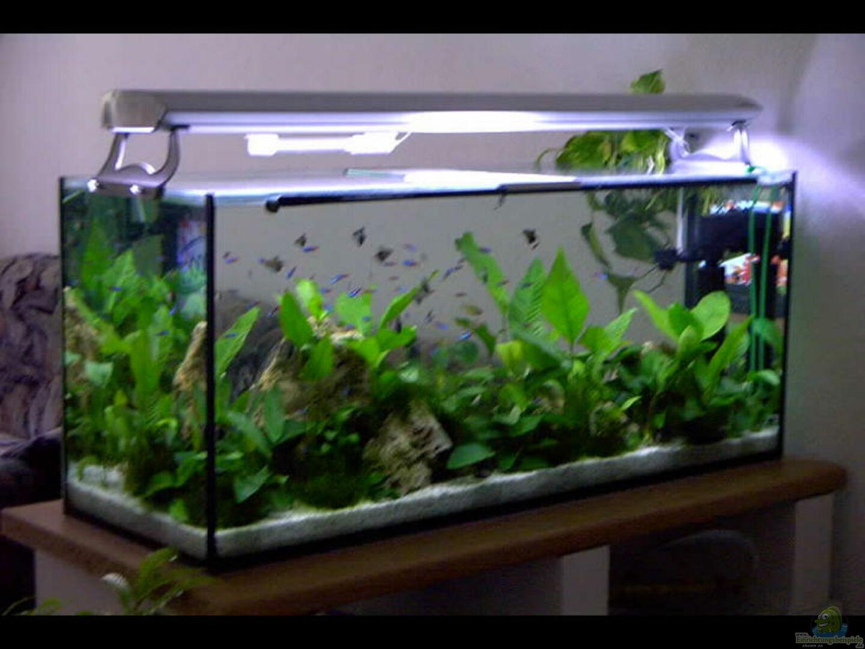 aquarium von gabriela lang becken 1501. Black Bedroom Furniture Sets. Home Design Ideas