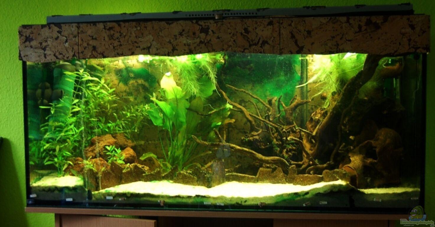 aquarium von ml69 der blaue bock. Black Bedroom Furniture Sets. Home Design Ideas