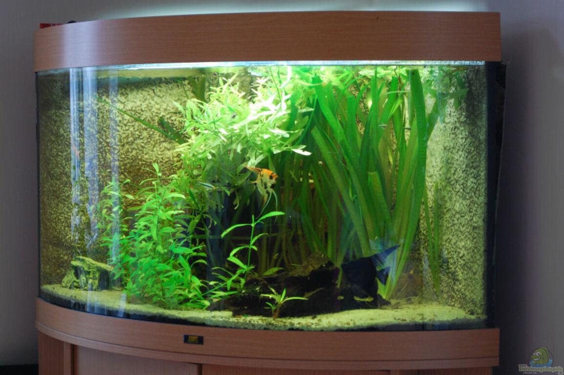 aquarium von anikas b eckaquarium juwel trigon 190. Black Bedroom Furniture Sets. Home Design Ideas