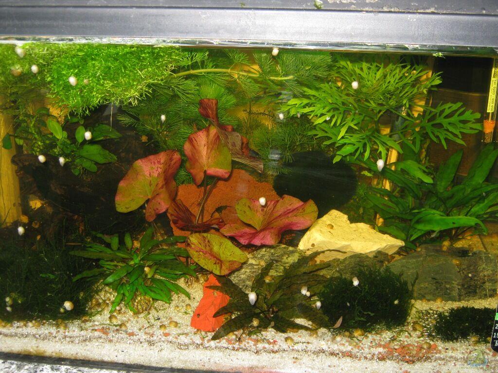 nano aquarium einrichten nano aquarium einrichten u. Black Bedroom Furniture Sets. Home Design Ideas