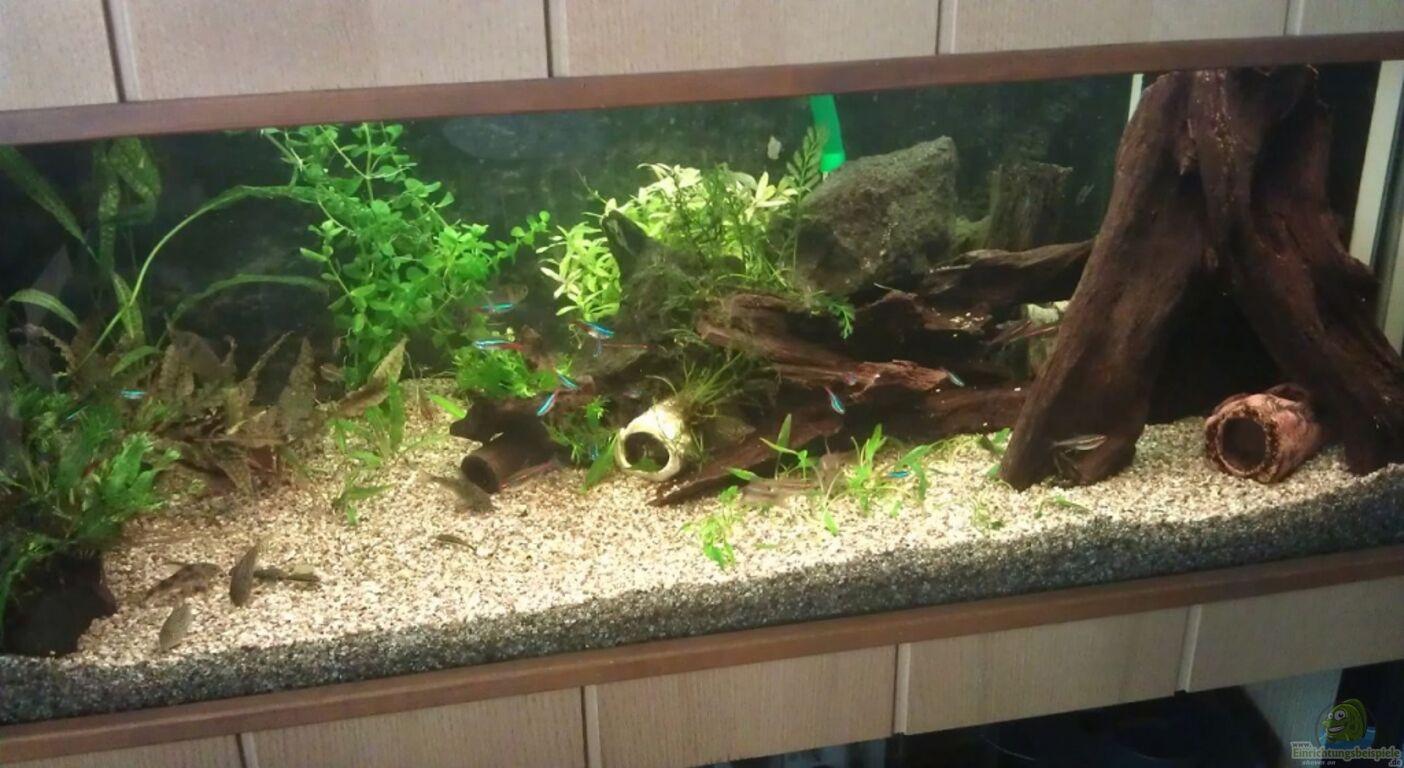 einrichtungsbeispiele f r aquarien mit pflanzen. Black Bedroom Furniture Sets. Home Design Ideas