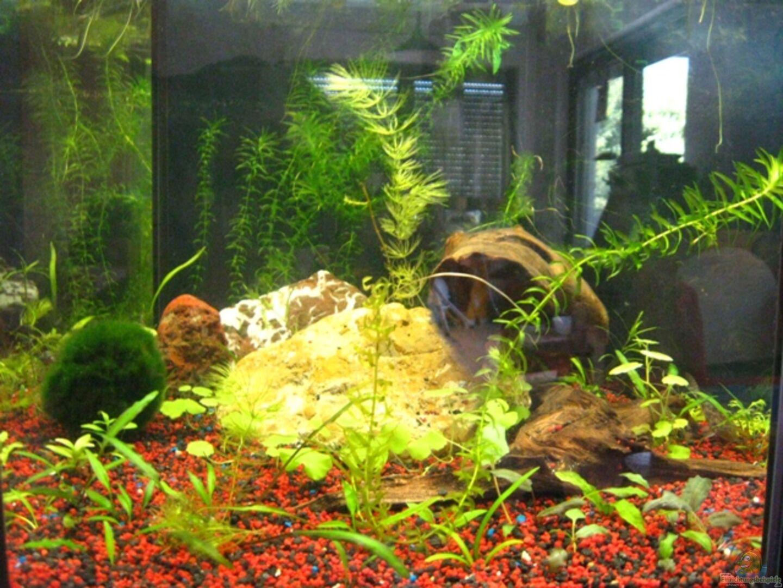 aquarium von danbri 15213 80l 6 eck aquarium. Black Bedroom Furniture Sets. Home Design Ideas