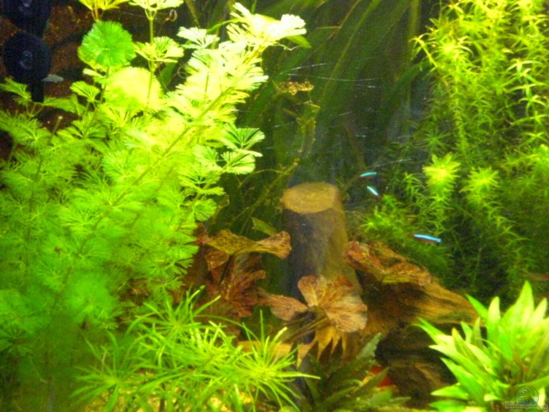 Aquarium von matthias hage hagisworld for Aquarium plat