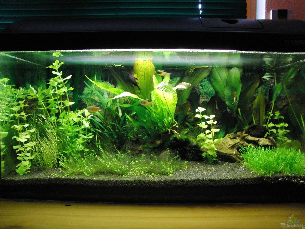 Aquarium von oberregenwurm waterhome for Waterhome aquarium